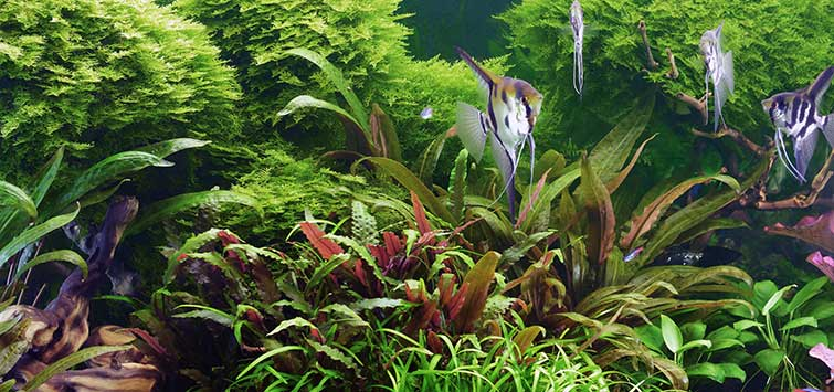 Aquarium Setup Guide | Tropical Fish Hobbyist Magazine
