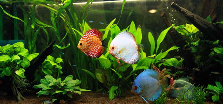 Fish Tank Care Tropical Fish Hobbyist Magazine