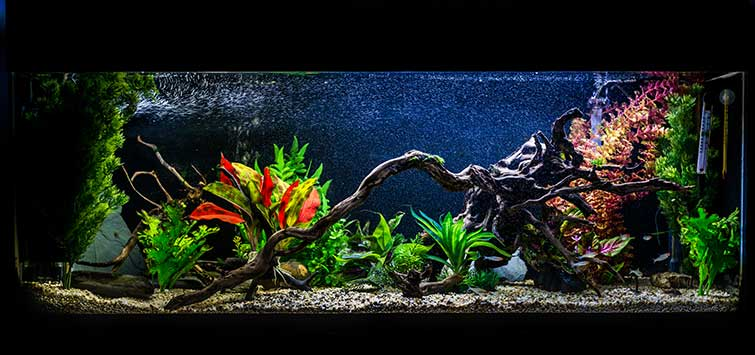 Aquarium Filtration | Tropical Fish Hobbyist Magazine