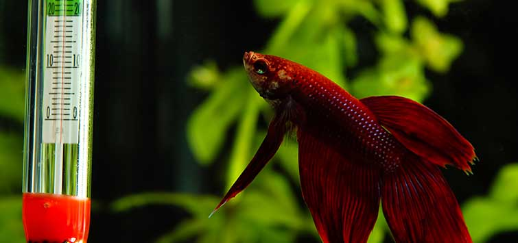 Aquarium Temperature Control | Tropical Fish Hobbyist Magazine