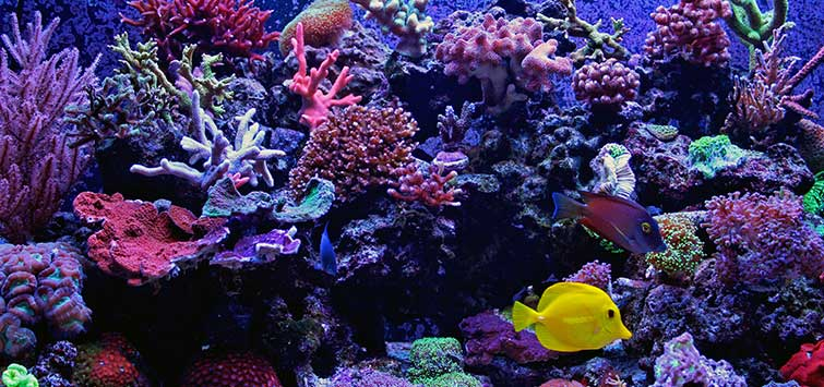 Saltwater Reef Tank Tips | Tropical Fish Hobbyist Magazine