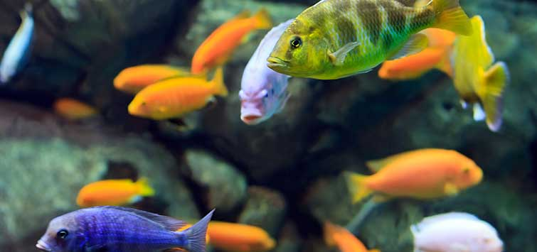 Seeking Tropical Fish Compatibility | Tropical Fish Hobbyist Magazine