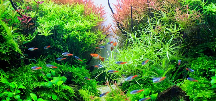 How to Set Up a Planted Aquarium | Tropical Fish Hobbyist Magazine