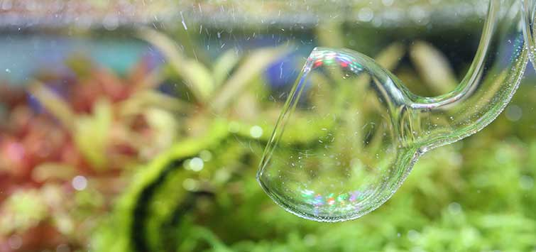 Filtration in the Nature Aquarium | Tropical Fish Hobbyist Magazine