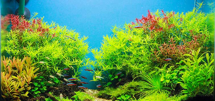 Going High-Tech to Aquascape Your Fish Tank | TFH Magazine
