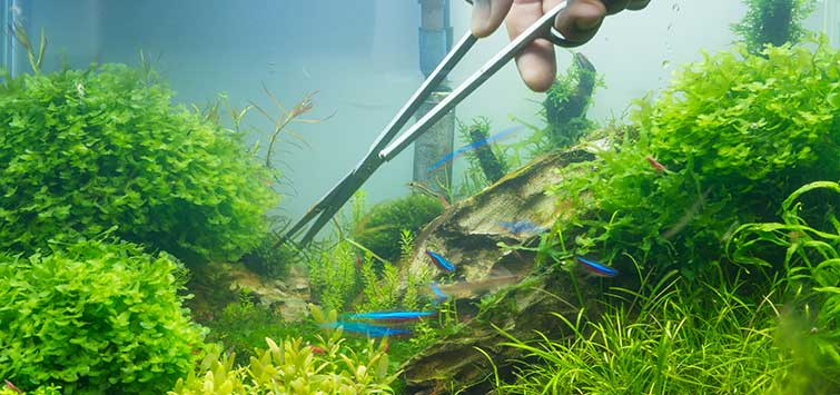 Trimming Aquatic Plants | Tropical Fish Hobbyist Magazine