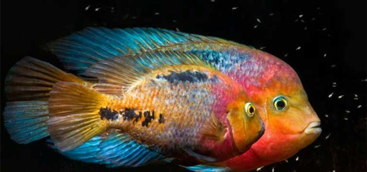 Taking Pictures of Cichlids | Tropical Fish Hobbyist Magazine