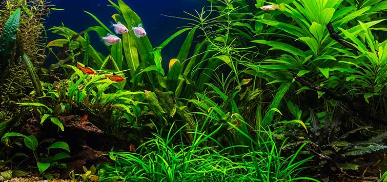 How to Plant an Aquarium | Tropical Fish Hobbyist Magazine