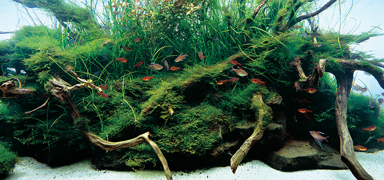 Aquarium Scenery | Tropical Fish Hobbyist Magazine