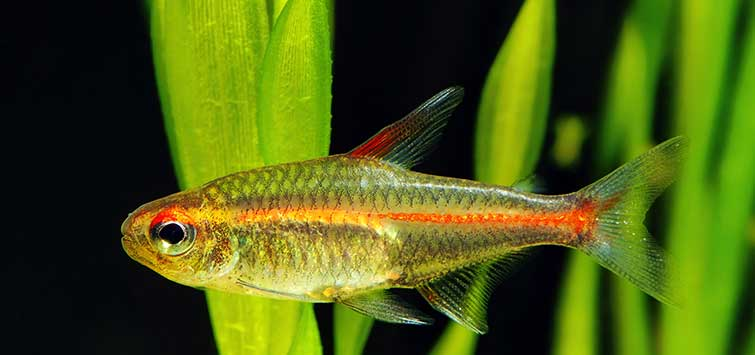 beautiful freshwater fish