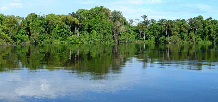 Hope Along the Rio Negro: Rising Waters | TFH Magazine