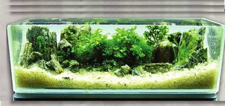 Nano Tank Plants From the Serbian Countryside | Tropical Fish Hobbyist Magazine
