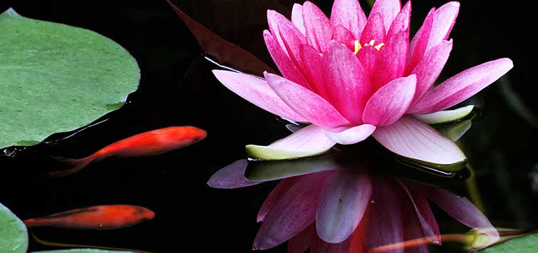 Designing a Garden Pond | Tropical Fish Hobbyist Magazine
