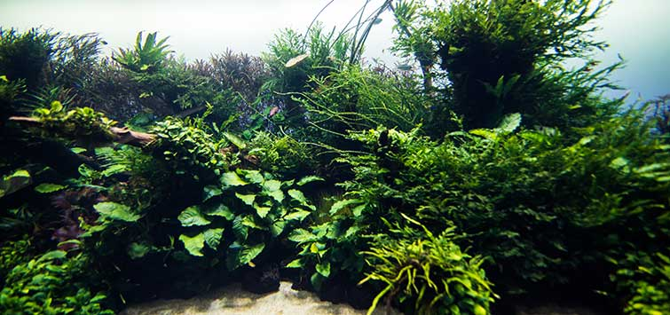 Preparing Nature Aquariums for Long-Term Maintenance | TFH Magazine