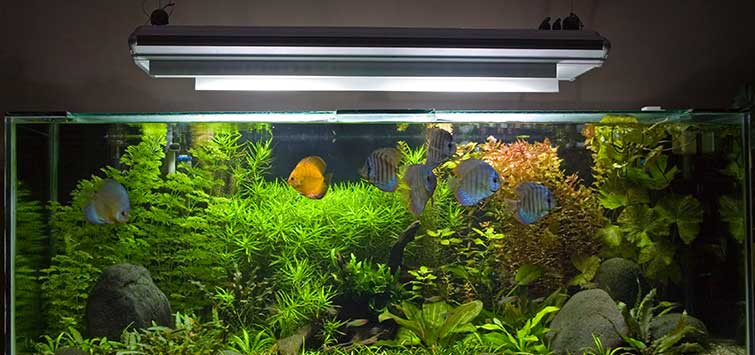 Best Aquarium Lighting Techniques | Tropical Fish Hobbyist Magazine