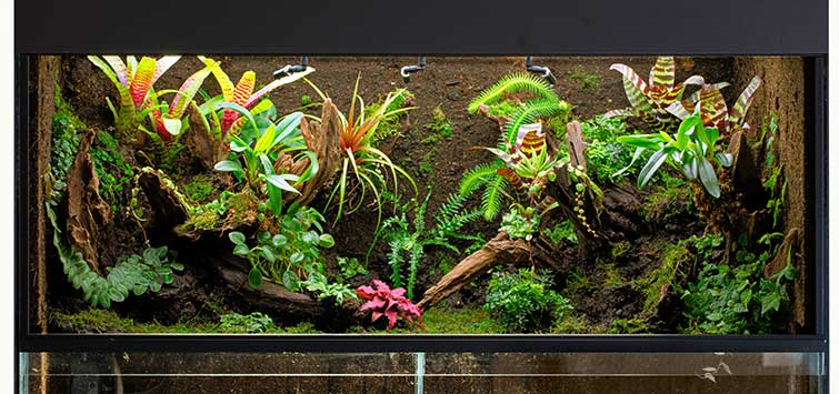 paludarium construction
