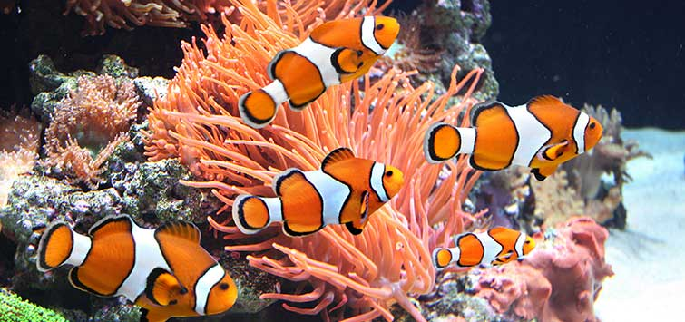 How to Start a Saltwater Tank | Tropical Fish Hobbyist Magazine