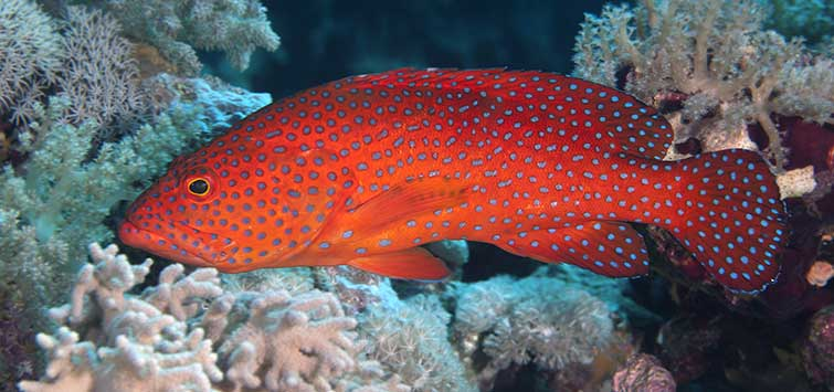 Selections for the Grouper Fish Tank | Tropical Fish Hobbyist Magazine