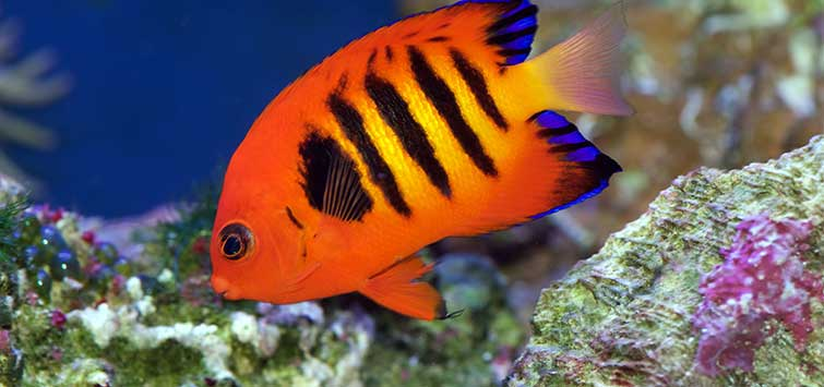 Marine Fish Tank Challenges and Triumphs | TFH Magazine