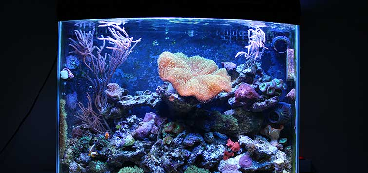 Nano Reef Setup, Part 1 | Tropical Fish Hobbyist Magazine