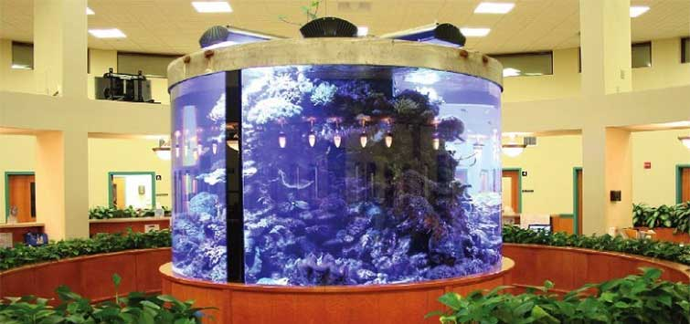 Red Bank Veterinary Hospital's 2000-Gallon Circular Reef | TFH Magazine