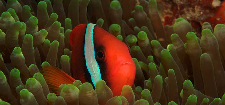 taking care of clownfish