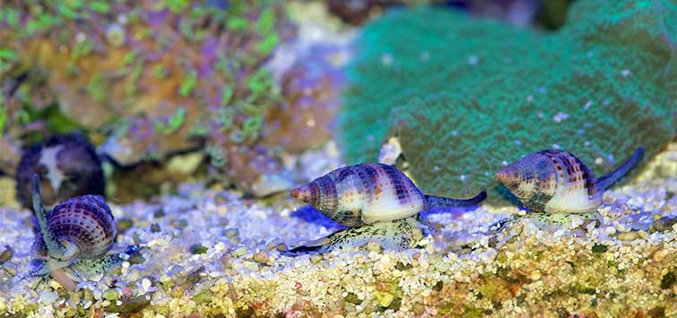 saltwater cleaner fish