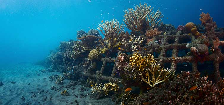 Coral Reef Restoration: the Biorock Project | TFH Magazine