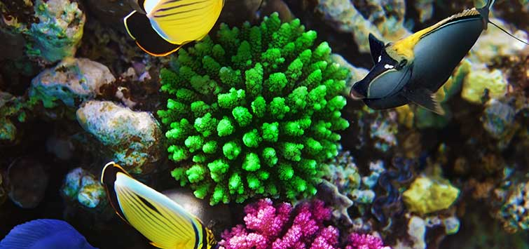 saltwater fish tank basics