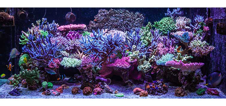 Lighting, Photosynthesis, and Marine Invertebrates | Tropical Fish Hobbyist Magazine
