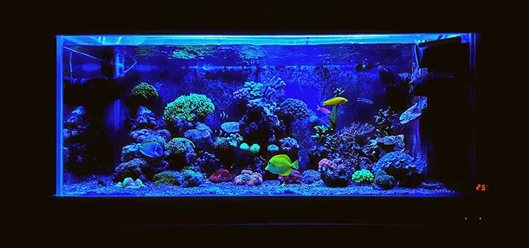 Reef Lighting | Tropical Fish Hobbyist Magazine