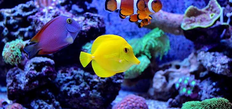 Marine Aquarium Basics: Water and Salt | Tropical Fish Hobbyist Magazine