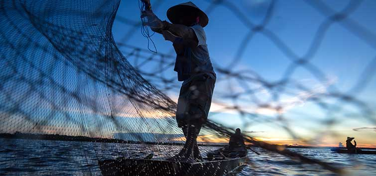 catching fish with a net