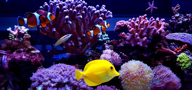 How to Measure Salinity in Water | Tropical Fish Hobbyist Magazine
