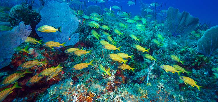 Snorkeling in Cuba | Tropical Fish Hobbyist Magazine