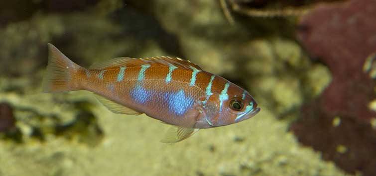 beginner saltwater fish