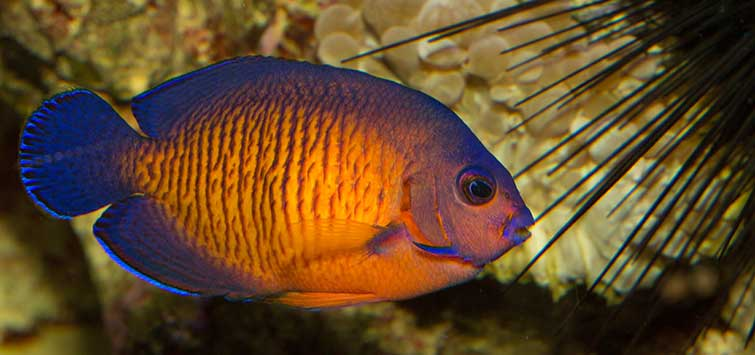 Saltwater Starter Fish for Novices | Tropical Fish Hobbyist Magazine