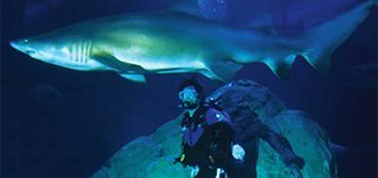 Swimming With Sharks at the Adventure Aquarium | TFH Magazine