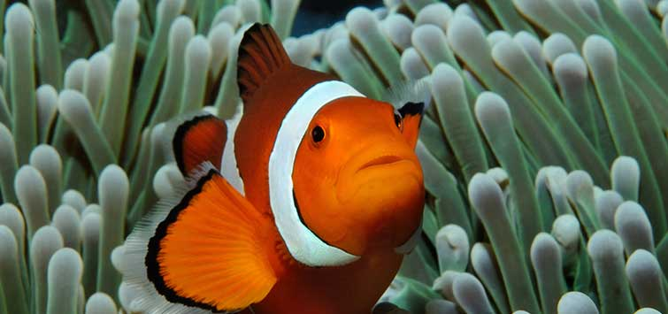 The Percula Queen's Fish Collection | Tropical Fish Hobbyist Magazine