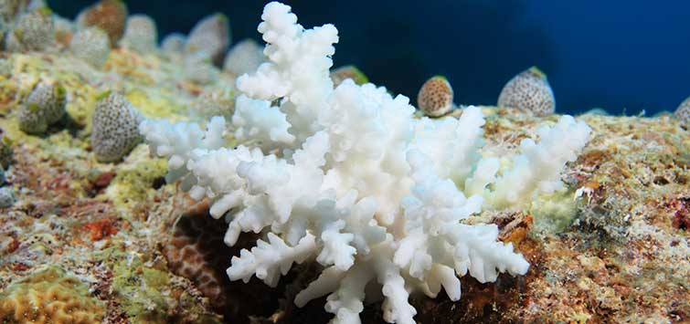 Coral Bleaching Solutions | Tropical Fish Hobbyist Magazine