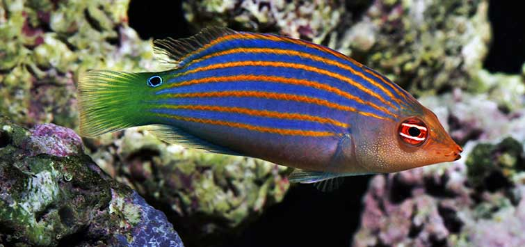 Keep Biological Controls in Balance | Tropical Fish Hobbyist Magazine