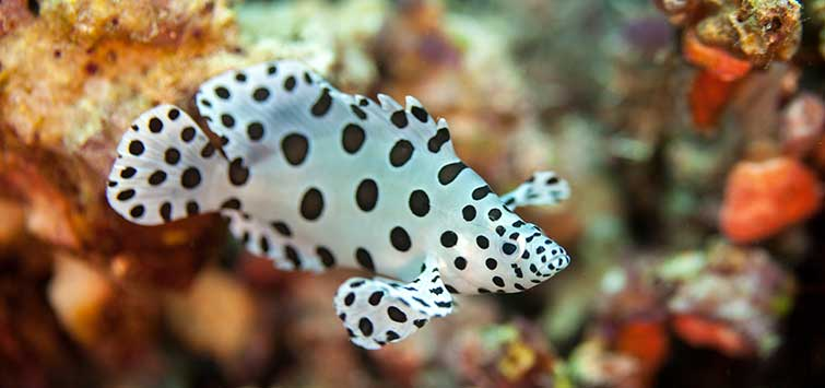 They're So Cute When They're Small | Tropical Fish Hobbyist Magazine