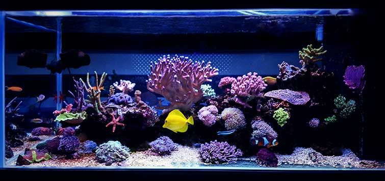 My DIY Aquarium Experience | Tropical Fish Hobbyist Magazine