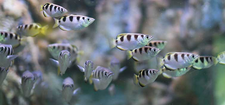 The Status of Fish in the Philippines | Tropical Fish Hobbyist Magazine