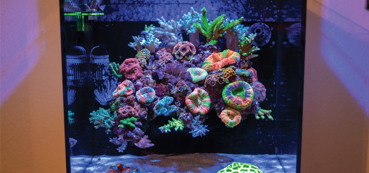 How To Build A Floating Reef Aquascape Tropical Fish Hobbyist Magazine